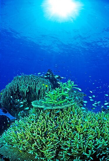 Coral reef scene by David Wachenfeld