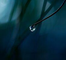 Drip by Mel Brackstone