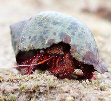 Red Hermit Crab by Romandar