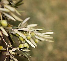 Olive Tree by VaidaAbdul