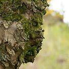 Tree Face by Sue Robinson