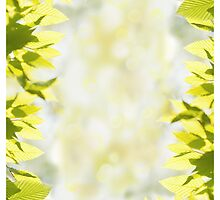 green bright leaves and blurred bokeh  by Arletta Cwalina