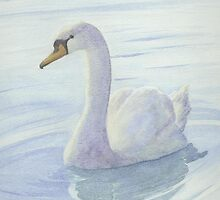 Mute Swan #2 by Catherine091