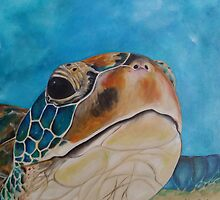 Turtle close up by noleenr