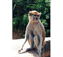 African monkey - Print Photographic Print