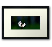 Such a Brief Life Framed Print