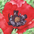 Red Poppy at Bodnant Gardens - Aquamarkers. by Gee Massam