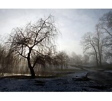 Willow in the Mist Photographic Print