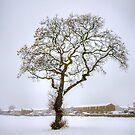 Gnarled tree in a snowy field by Tom Gomez