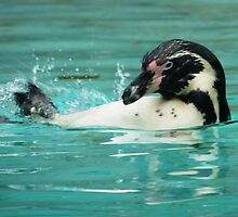 Penguin swimming  by IgniteOscar