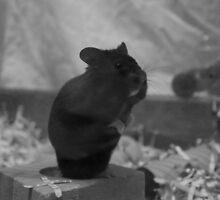 My Pride and Joy, My Little Boy.... RIP Minstrel by Vicki Spindler (VHS Photography)
