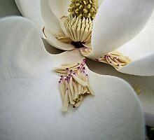 Magnolia Madness by aprilann