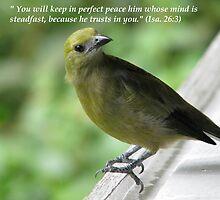Hope Series: Isa.26:3 by hummingbirds