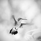 Hummingbird in Black and White by Corri Gryting Gutzman