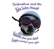 Chihuahua and the Bike Safety Message --New and Improved Tee Photographic Print