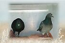 A loving pair - Love for Pigeons by Maree  Clarkson