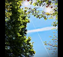 Matthew 13:16 Contrail of the Cross by Terri Chandler