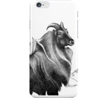 Bull Thar (Tahr) Sniffing the Breeze iPhone Case/Skin