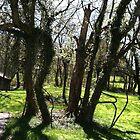 Trees Near the Well by trisha22