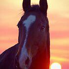 Lemon Sky, Chocolate Horse by kurrawinya