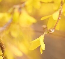 Yellow Morning by HeatherWSmith