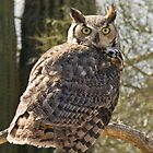 Great Horned Owl by Linda Gregory
