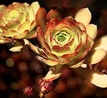 Desert Roses by Ellen Cotton