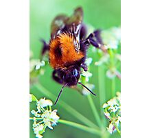 Bee Trouble Photographic Print