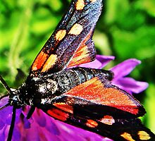 Black butterfly with red polka dots by fotosbykarin