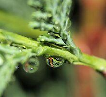A Tennessee Morning Rain by aprilann