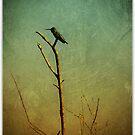 humming still by Jill Auville