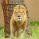 The Lion Throw Pilliow & Tote Bag by Gene Praag