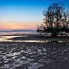 Mangrove Tree At Dawn by Kevin Hellon