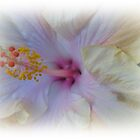 Hibiscus by Gary Kelly