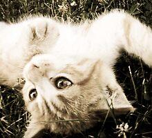 Kitten by amandavs