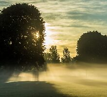 Golden Hour Fog by whymatters