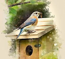 Eastern Bluebird Watercolor Art by Christina Rollo
