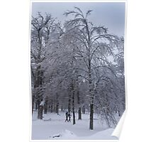 Elegant Tree after Ice Storm Poster