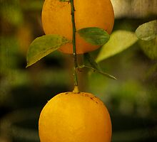 Fruit Of The Orange Tree by MotherNature