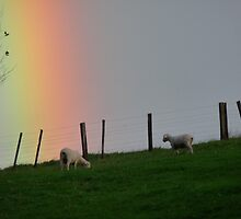 Lambs with Rainbow by MHen