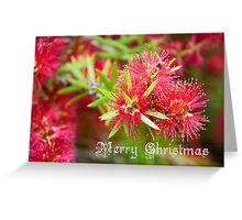 Merry Christmas - Bottlebrush Greeting Card