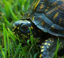Da Backyard turtle by DonnietheTurtle