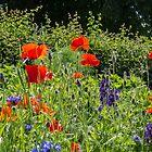 Cottage garden by JanSmithPics