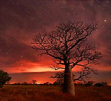 Boabs and Bushfires  by Rod Hartvigsen