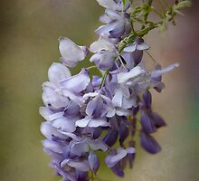 Wisteria Textured by Dianne English