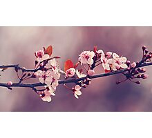 Soft side of Spring III Photographic Print