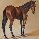 Tb Yearling, study by Stephanie Greaves