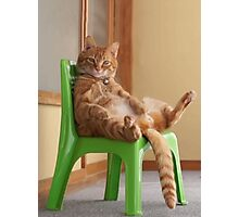 The most chilled out cat! Photographic Print