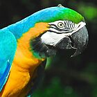 Mr Macaw The Blue Version :) by Penny Smith