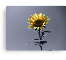 BLOOMING BRIGHT Canvas Print